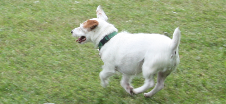 Roxy Runs