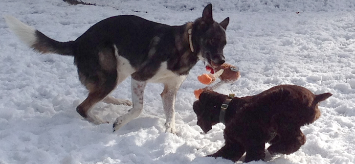 Flim and Cookie in the Snow