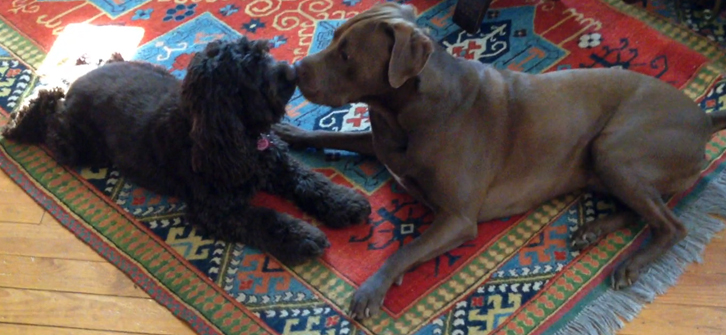 Cookie and Annie want to take Joyful Dog Training Pairs dog training classes.