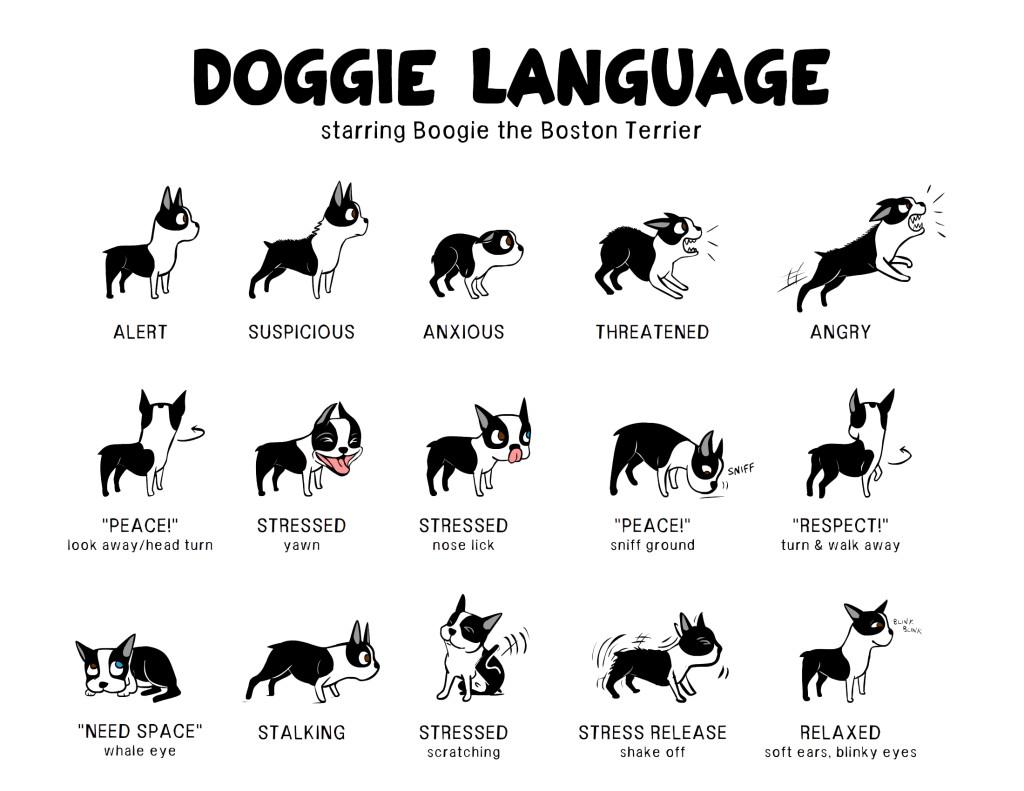 body language your dog has a lot to say joyful dog