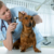 Is Your Dog Healthy?