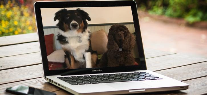 Joyful Dog is Online