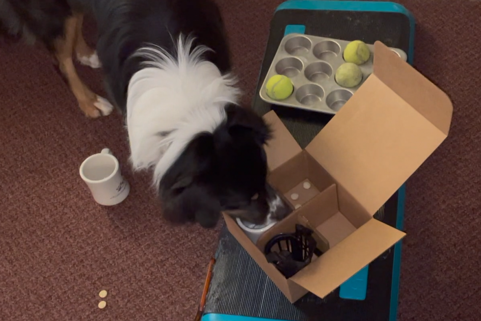 Enrichment: The Spice of (Your Dog's) Life!